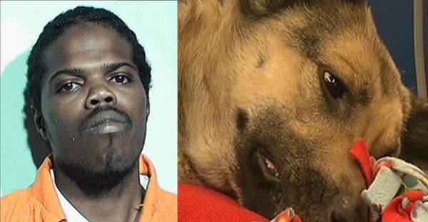 Quick links to share the petition: Demand maximum penalty for Toledo man that shot defenceless stray dog!   Yousign.org