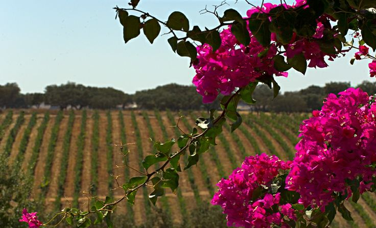 The Alentejo wine countryside ...#Alentejo #Portugal