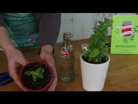 How to Root Plant Cuttings in Water : Indoor Planting - YouTube
