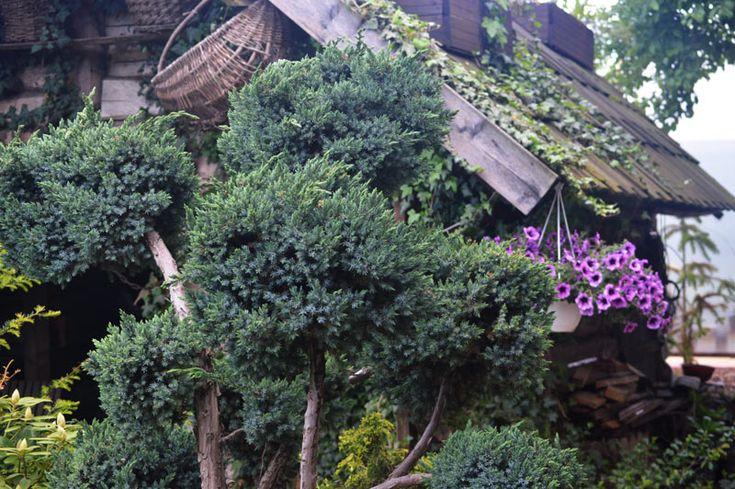 Вечнозеленый сад Михаила Малаша в Минске
