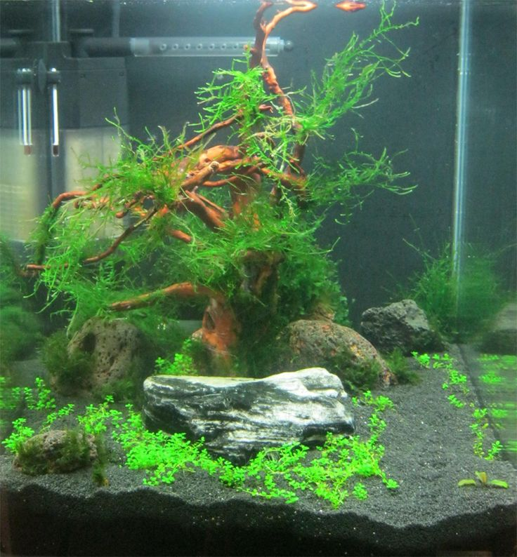 Freshwater Aquascape: 17 Best Images About Planted Nano Tanks On Pinterest