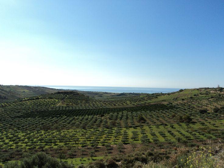 Panoramica della nostra azienda con sfondo sul Mediterraneo