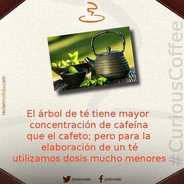 #SabíasQue el té tiene más #cafeína que el propio #café, pero...