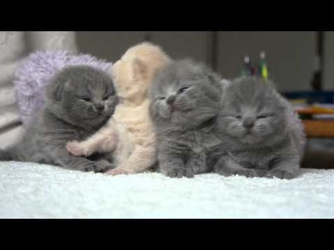Kittens waking up from a nap. If this doesn't melt your heart, then you have no soul
