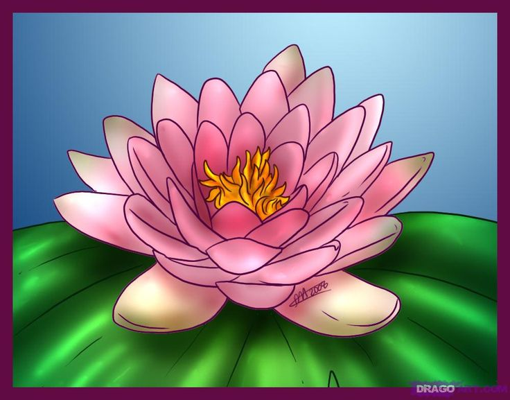 how to draw a lotus flower water lily i like the way the dark outlines emphasize each petal. Black Bedroom Furniture Sets. Home Design Ideas