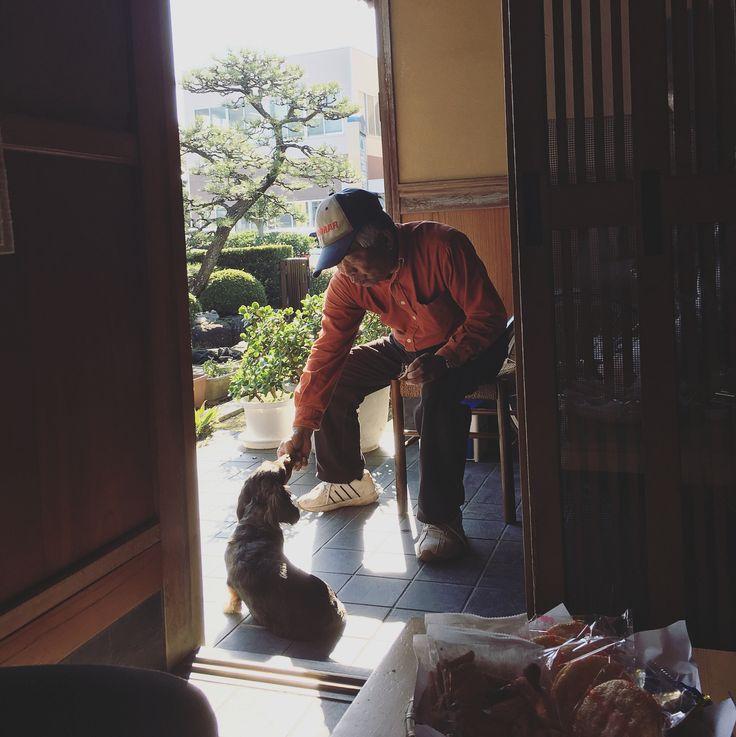 昨日の一服中と剪定作業中の風景 . . . #国府町#n邸#k邸#一服中 #剪定作業中 #ナラちゃん #ミニチュアダックスフンド#miniaturedachshund  #庭#garden #庭や#niwaya #徳島#tokushima #japan #landscape #gardener #landscaper #green