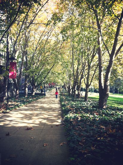 Fall @ Macquarie University