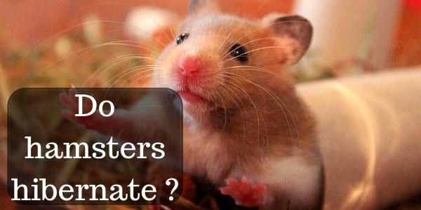 144d3c35ab2edf00b5dcdb8fcc7761f5 - How To Get My Hamster To Stop Biting His Cage