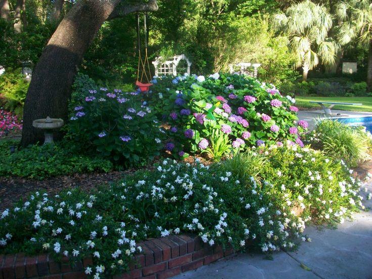 Dwarf Gardenias, ivy, Impatiens, Hydrangeas and more.