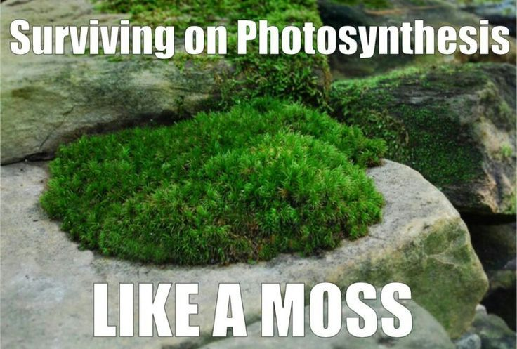 Photosynthesis | Science for Secondary Grades: Biology ...