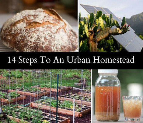 14 Steps To An Urban Homestead | Make the most of city life by creating an urban homestead to save money, become self-sufficient, and to live healthier.