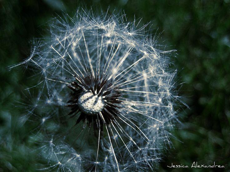 Blow Wish