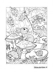 autumn rain mushrooms