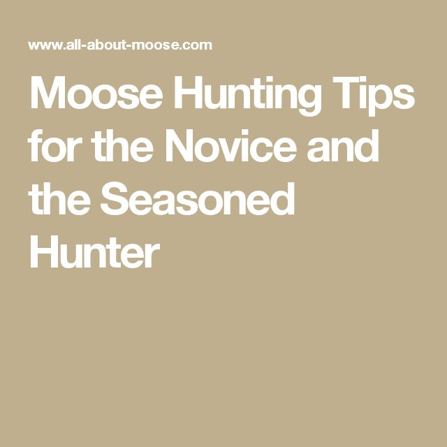 Moose Hunting Tips for the Novice and the Seasoned Hunter
