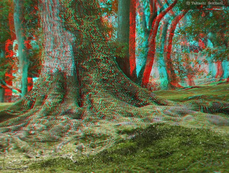IMAGINATION - Surface of the forest (3D - anaglyph)