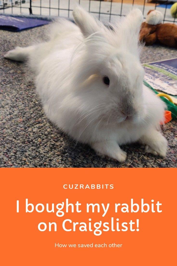 I Bought My Rabbit On Craigslist Pet Names Rabbit Pets