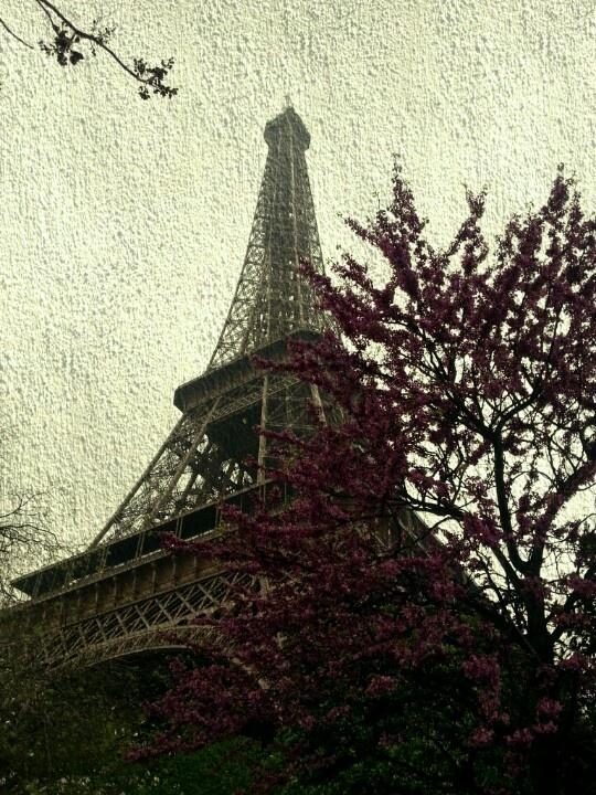 Eiffel Tower beneath Blossoms