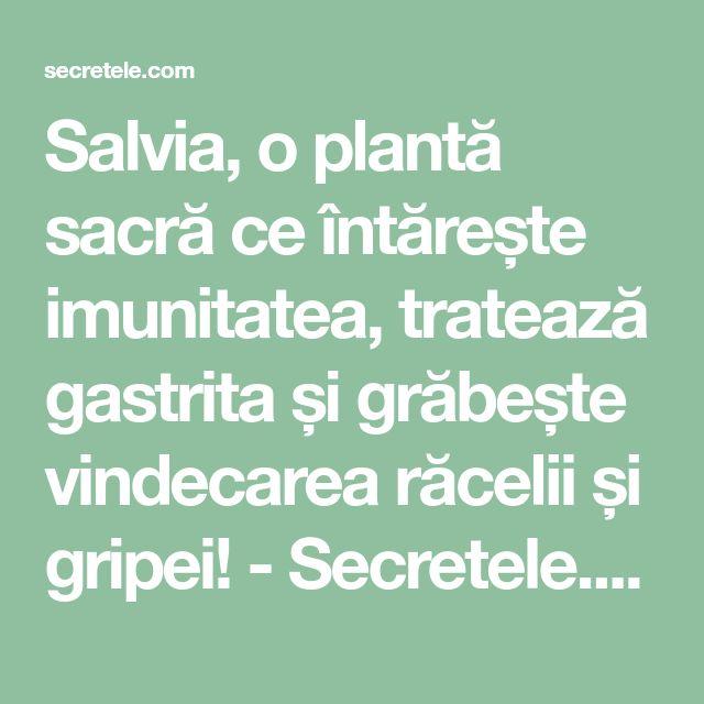 Salvia, o plantă sacră ce întărește imunitatea, tratează gastrita și grăbește vindecarea răcelii și gripei! - Secretele.com