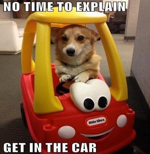 Funny Dog Memes Funny Animal Memes Funny Animals Funny Dog Memes