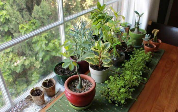 3 egyszerű trükk a szobanövények egészségéért. Használd rendszeresen és a virágok meghálálják a törődést!