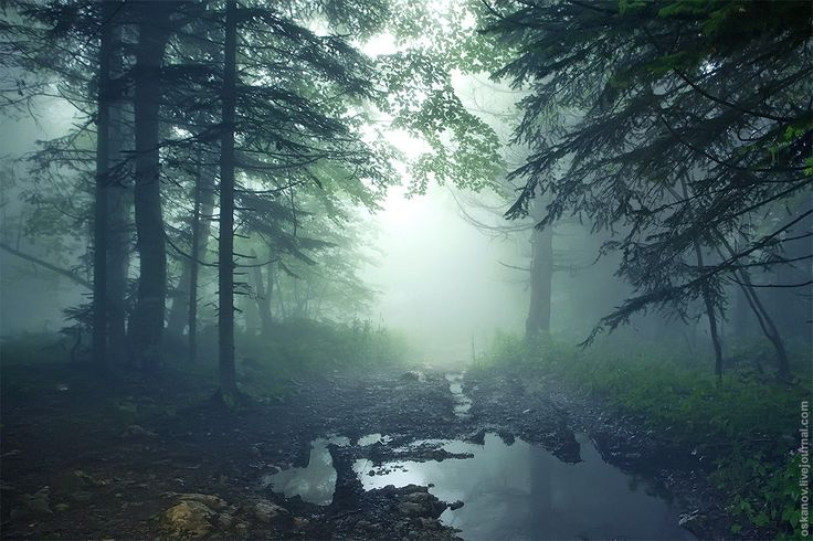 Once Upon in Russia - Beautiful fantasy landscape of mysterious forest and fog