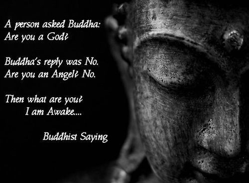 Awakening The Buddha Within Quotes: Quotes / Words Of Wisdom