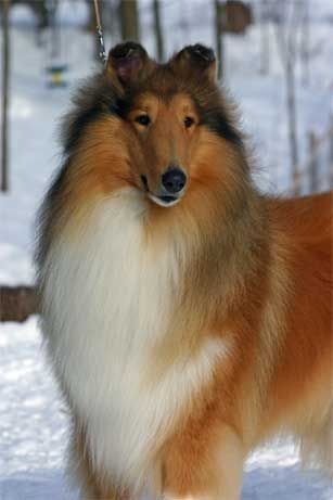 This looks like my doggy Rusty from my childhood. He was the best dog in the whole world.