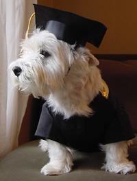 Top 10 Punto Medio Noticias Graduation Cap Gown For Dogs