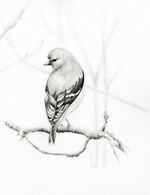 Bird Pencil Drawing Fine Art Print of my Original Bird Pencil Drawing Black and White Teamt. $30.00, via Etsy.
