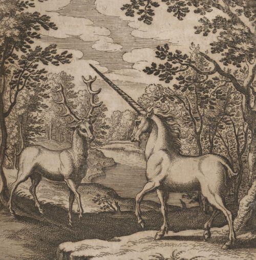 Maria Sibylla Merian -Musaeum hermeticum reformatum et amplificatum - 1678 - viaBeinecke Library