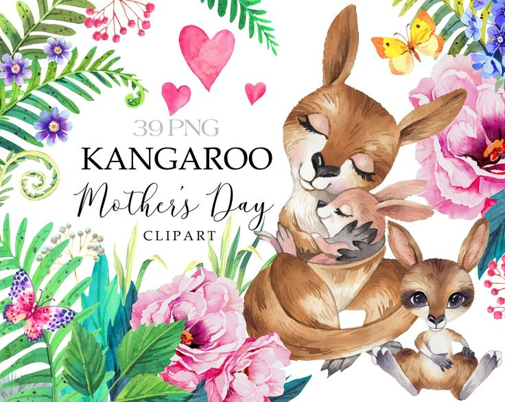 35+ Mother And Child Animal Clipart Kangaroos
