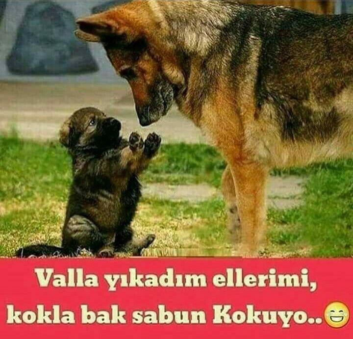 Aynı benim kuzucuklar ; ))))
