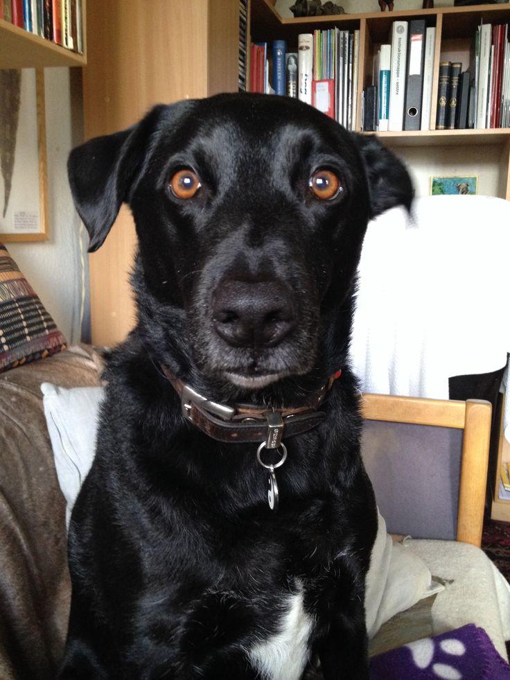 Balto my dog