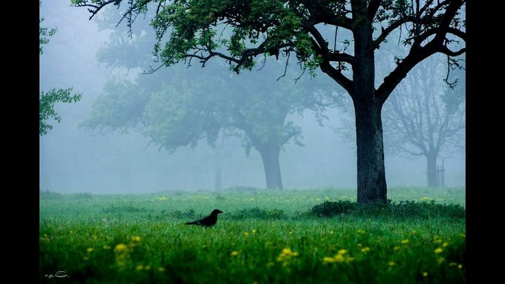 Favoritepark Naturschutzgebiet