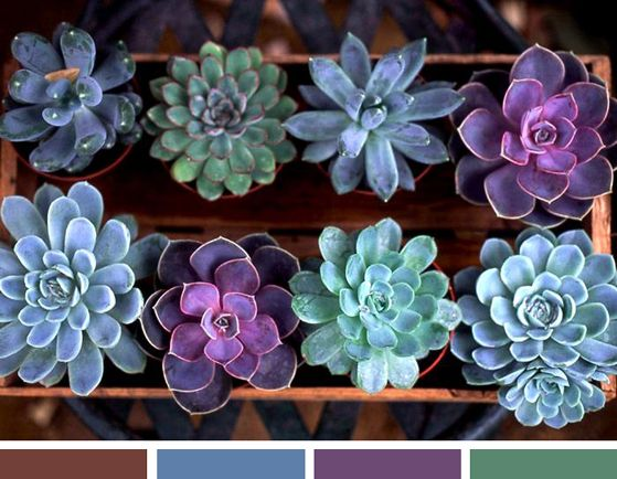 I love succulents. The colors, the shapes, the minimal care requirements... I think succulents will be a part of my wedding bouquet.