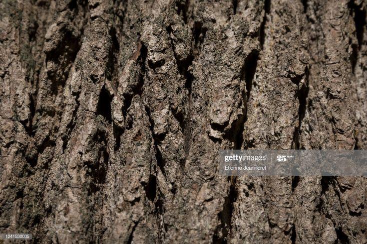 Montargis Centre Val De Loire France May 24 2020 In The Forest Oak Tree Bark Oak Tree Tree Bark