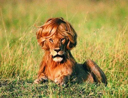 Admirable 17 Best Images About Animals With Funny Hair Styles On Short Hairstyles Gunalazisus