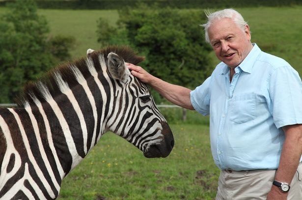 Sir David Attenborough (615×409)