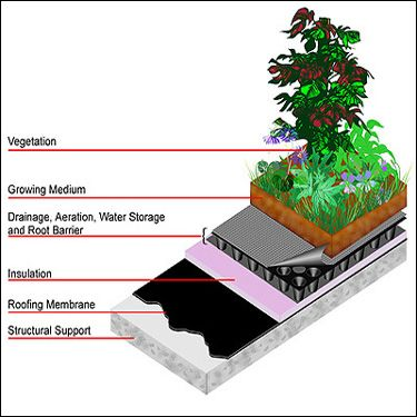 Alternative Energy News Source: Green Eco Living Toronto - New Green Roof Bylaw Passed By Council
