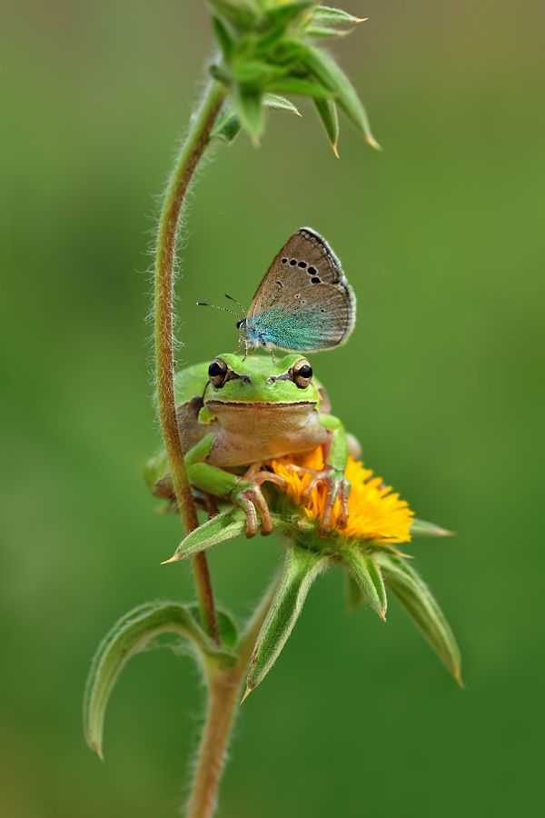 .Best Friends, Nature, Butterflies, Take A Breaking, Frogs, New Friends, Yellow Flower, Animal, Pictures Day