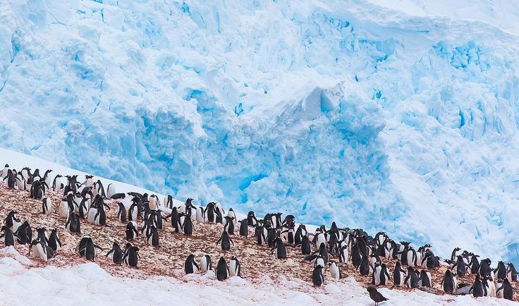 """🐧 Hurry !! You are running out of time, There is less than 4 days remaining to enter your best """"humans connecting with nature"""" photos for a chance to WIN an adventure of a lifetime !! Lindblad Expeditions is looking for an Instagrammer to shoot South Georgia & the Falkland Islands with Extreme Nature Photography on an epic expedition in October. Please read the rules below for a chance to win this photo commission aboard National Geographic Explorer. - Step 1: Follow @extremenature and…"""