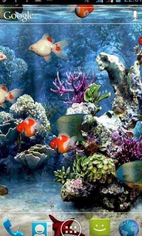 20 Wallpaper Animasi Bergerak Gratis Populer Free Download Terbaik Terbaru In 2020 Aquarium Live Wallpaper Cute Mobile Wallpapers Animated Wallpapers For Mobile