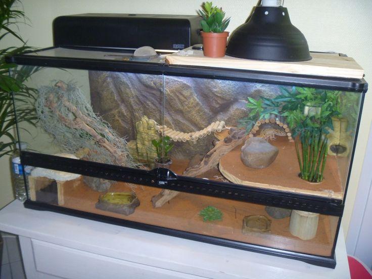 gecko+terrarium | Terrarium (geckos et élaphes)