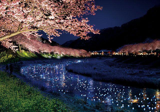 南伊豆のライトアップイベント「夜桜流れ星」