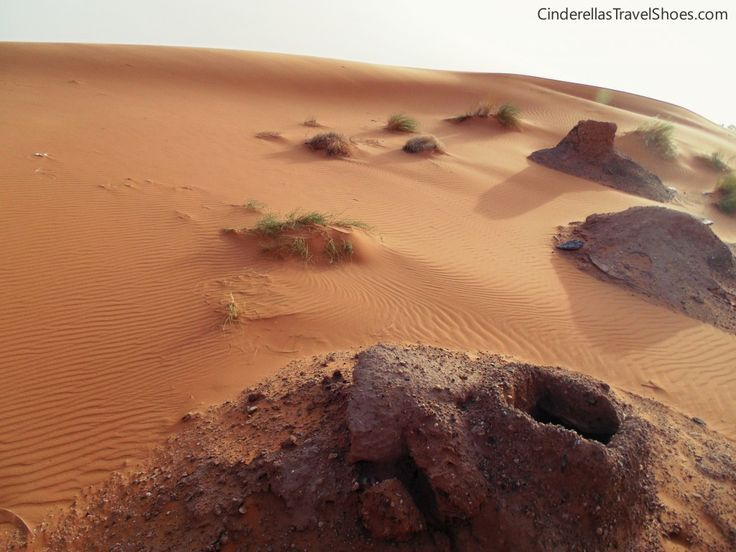 Oasis in Sahara desert in Morocco