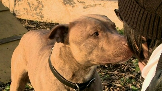 Death row dogs: Owners fight to keep pitbull-types alive