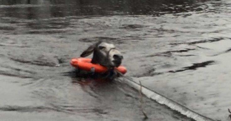Είδαν ένα Γαϊδουράκι να πνίγεται μέσα στο ποτάμι και του έσωσαν τη ζωή. Ο τρόπος που τους ευχαρίστησε; ΣΥΓΚΛΟΝΙΣΤΙΚΟΣ..!      (adsbygoogle = window.adsbygoogle    []).push();  Η εντυπωσιακή ηθοποιός πιάστηκε τόπλες στην παραλία, ενώ από κάτω φορούσε ένα πολύ αποκαλυπτικό μαγιό που απο�