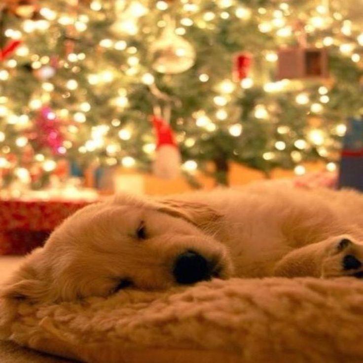How many sleeps to Christmas?