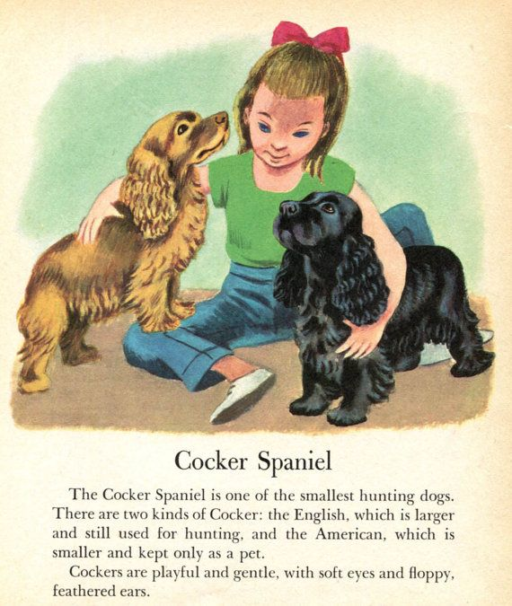Cocker Spaniel Dog Illustrations by Tibor Gergely - Girl with Cocker Spaniel Puppies