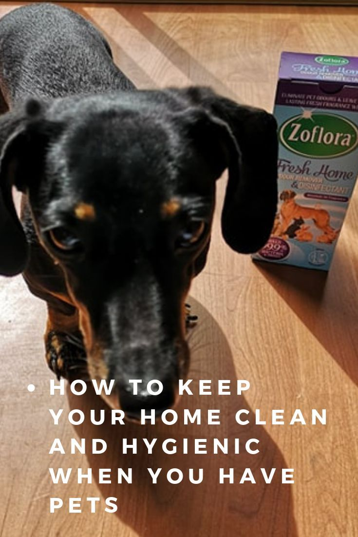 Zoflora Fresh Home Pet Disinfectant Product Review Dog Urine